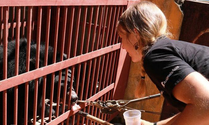 Central Vietnam tourist park hands over captive moon bears to sanctuary