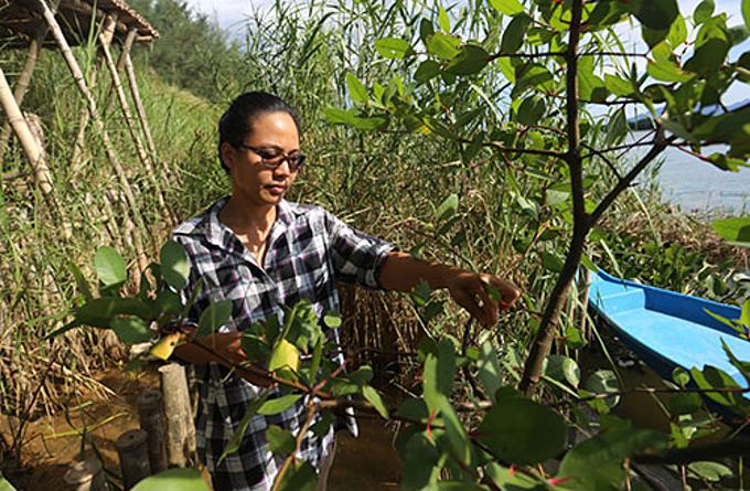 Vu Thi My Hanh checks on her green embankment along the Thu Bon River in Hoi An Town. Photo provided by Vu Thi My Hanh.