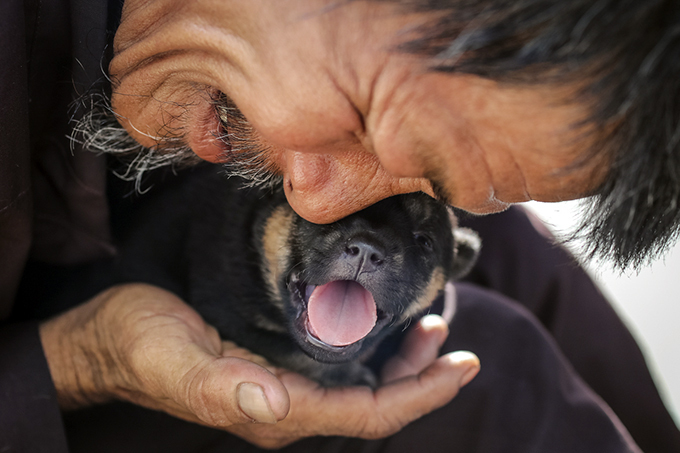 Homeless man dedicates life to rescuing dogs slated for slaughter - 1