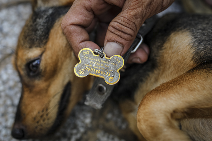 Homeless man dedicates life to rescuing dogs slated for slaughter - 4