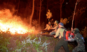 Central Vietnam tackles forest fires on war footing