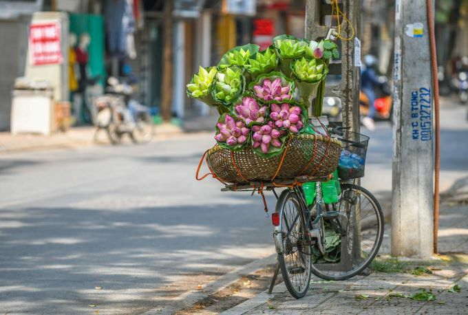Vietnam's rare lotus species - 8