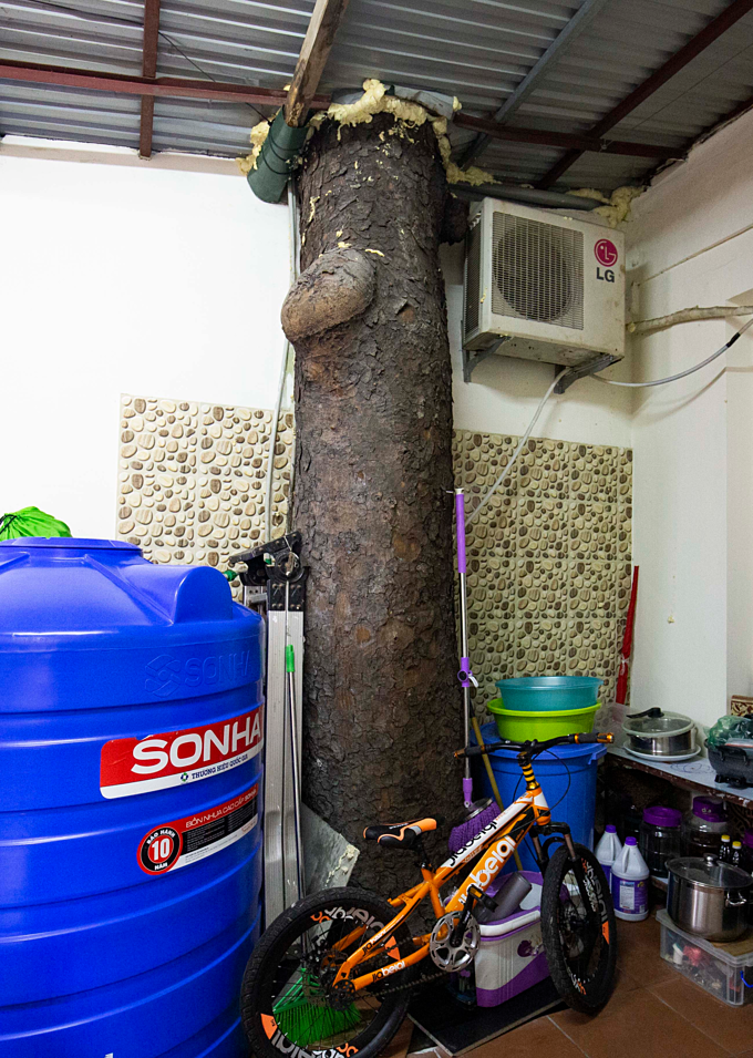 An indoor tree in one of the residents home next to home appliances. Photo by Duc Tung