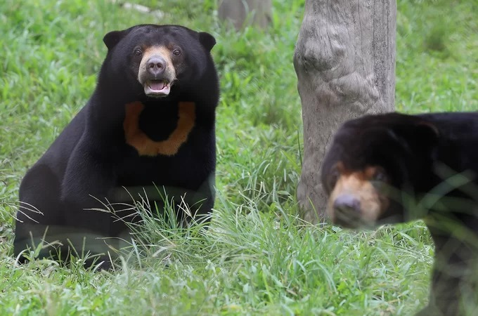 Inside Southeast Asias largest bear rescue center, where 200 bears live - 9