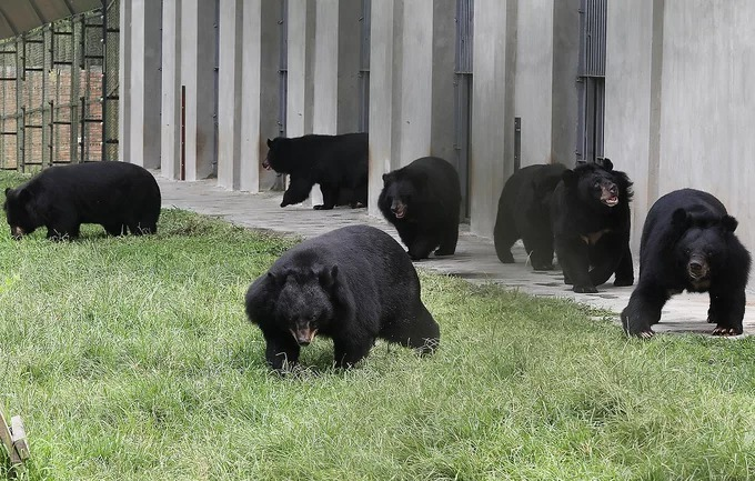 Inside Southeast Asias largest bear rescue center, where 200 bears live - 7
