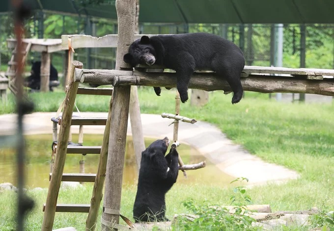 Inside Southeast Asias largest bear rescue center, where 200 bears live - 8