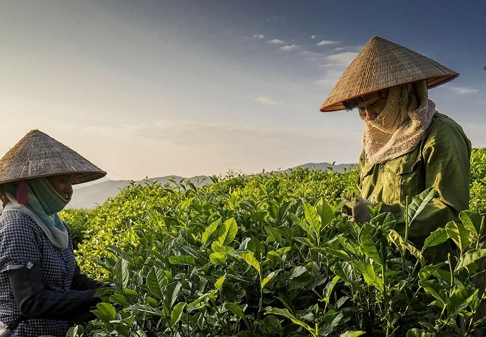 Vietnam's finest tea producer teems with other natural delights - 1