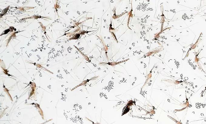 Multidrug-resistant malaria spreading in Vietnam, neighbors: study