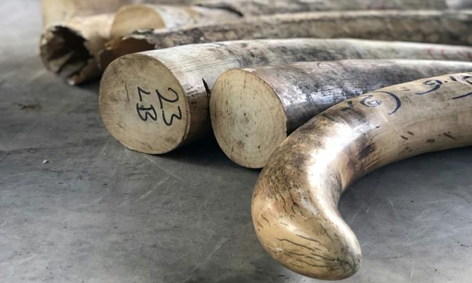 Singapore seizes biggest ever ivory haul en route to Vietnam