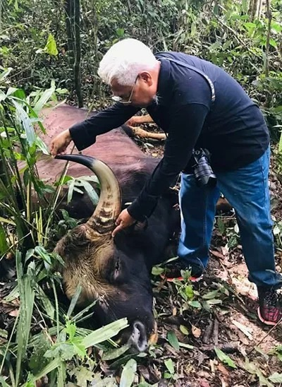Tran Van Mui, director of Dong Nai Culture and Nature Reserve, examines a gaurs body in the Dong Nai Culture and Nature Reserve, July 23, 2019. Photo by VnExpress/Thai Ha.