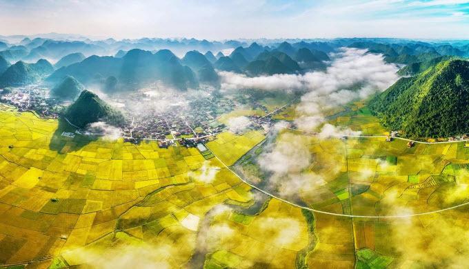Northern Vietnam valley unrolls its golden carpet