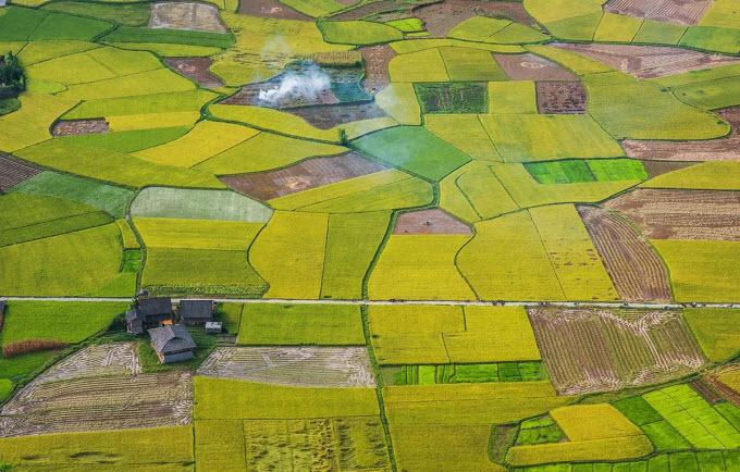 Northern Vietnam valley unrolls its golden carpet - 1