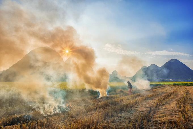 Northern Vietnam valley unrolls its golden carpet - 4
