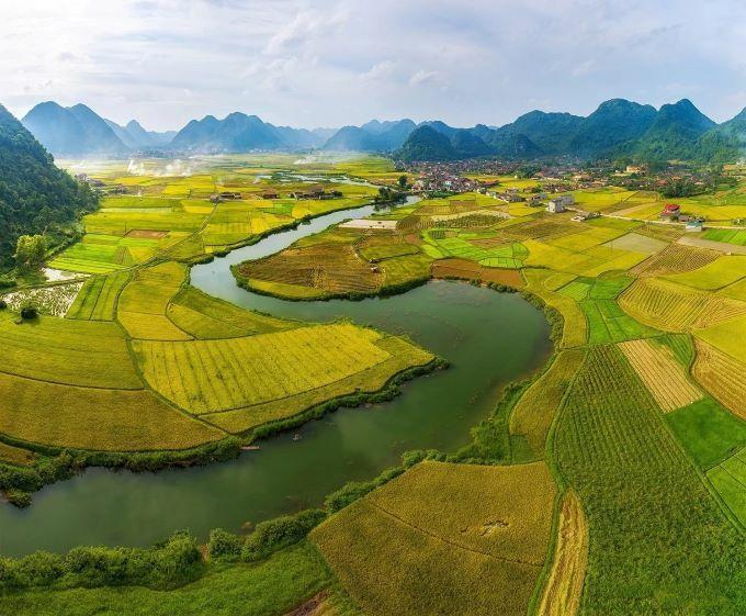 Northern Vietnam valley unrolls its golden carpet - 3