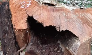 Police probe illegal logging of 99 trees in national park
