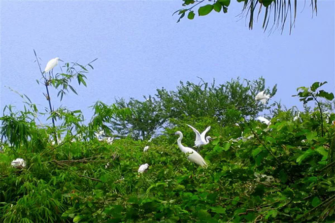 Bang Lang Stork Garden is home to thousands of storks as well as many other kinds of birds. Photo courtesy of Can Tho Tourism Department.