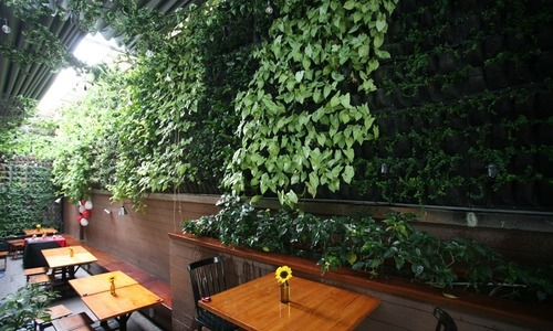 A garden on the wall that is a café in downtown Saigon