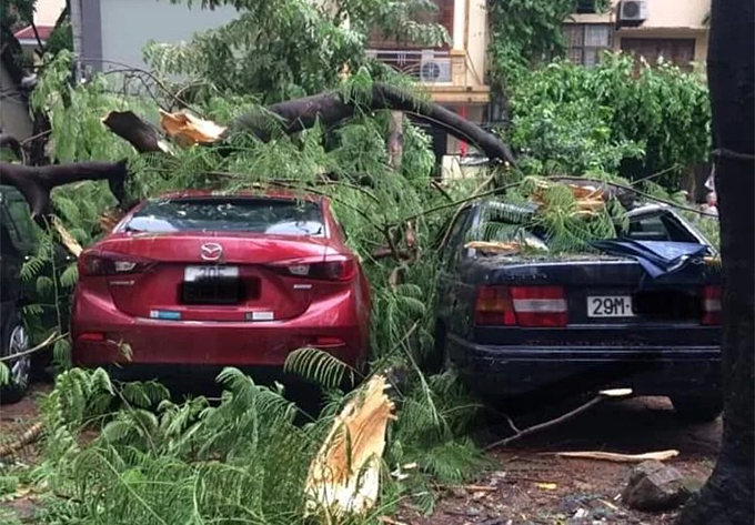 A tree falls on two cars in Thuy Khue Street, Hanoi August 29, 2019. Photo by VnExpress/Ba Do.