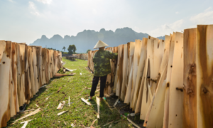 Vietnam suspects China hand in plywood export surge