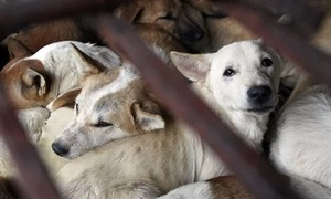 Saigon urges residents to stop eating dog meat