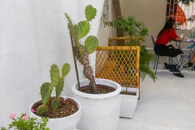 Cactus is another popular plant of the Mediterranean region.