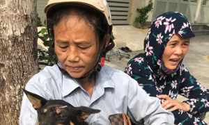 51 rescued dogs find shelter after central Vietnam bust