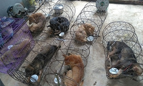 Thanh Hoa cops question 16-member gang for stealing '100 tons' of dogs