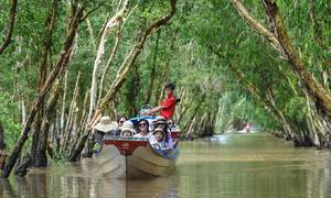 Get into the flow in a Mekong Delta cajuput forest