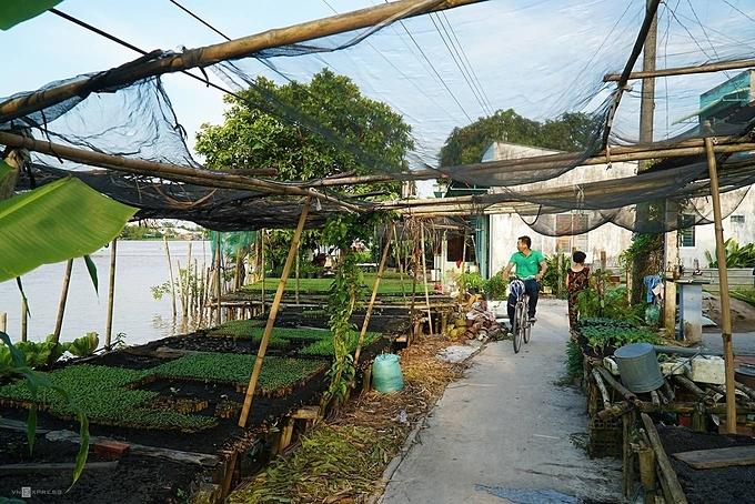 One September afternoon, a group of tourists cycled along the nurseries in Nhon Hung hamlet. They visited the Ly Ems family's garden to learn about their craft.