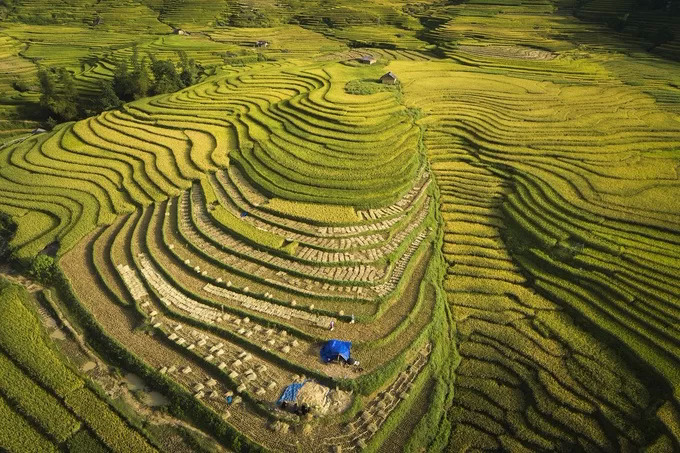 Terraced rice fields in A Lu, a commune in Bat Xat District of Lao Cai Province. Amidst the immense ripe rice are the ancient houses of the Ha Nhi ethnic people.