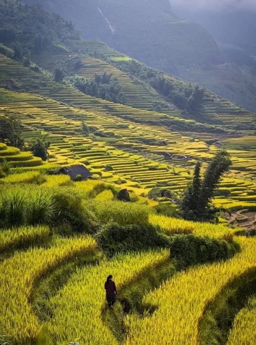 Depending on ones schedule, there are various routes one can take to Lao Cai during the harvest season. For me, no matter which route I took, the beauty here fascinates me to the point it can make me forget my way back home, Long added.