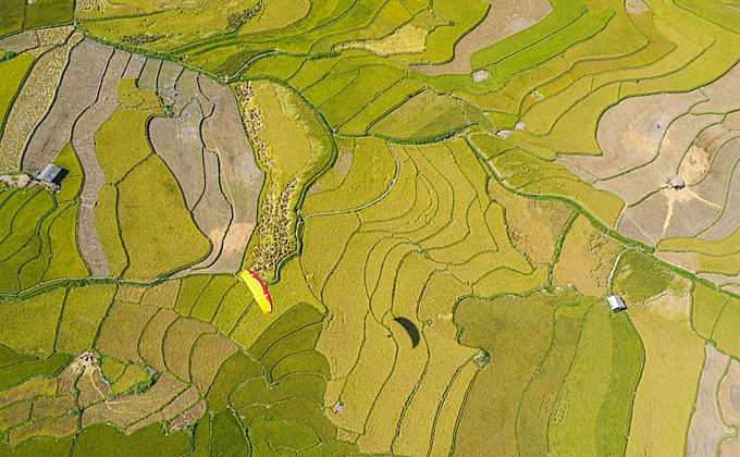 Paragliding over golden rice field in Tu Le. In mid-September and early October, it is an ideal time to see terraced fields in Yen Bai during the ripe rice season. This is also the time when photography lovers all over the country come to compose photos. Photographer Nguyen Tan Tuan (Ho Chi Minh City) has a photo hunt with his colleagues on a journey from Tu Le (Van Chan district) to Lam Mong and Lam Thai villages - Cao Pha valley - Khau Pha pass and Che road Cu Nha - La Pan Tan - Lao Chai - Sang Nhù (Mu Cang Chai district).