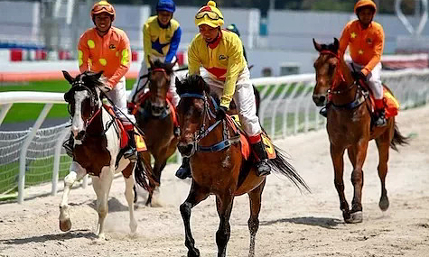 Hanoi's horse racing complex to go into operation in 2020