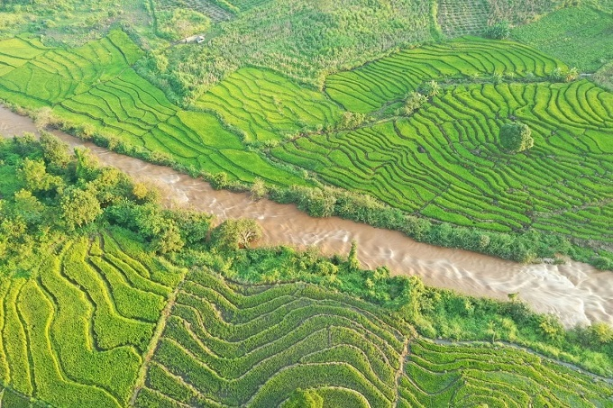 Rice paddies thrive from the freshwater flow spewing from the artificial lake Ayun Ha and streams in Gia Lai.