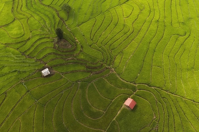 In the picture above, one can see that each field consecutively connects to one another forming a mosaic of green shades on the highland. I feel refreshed when wandering amongst these deep green rice paddies, relishing in the peaceful ambiance free from air pollution, photographer Hoang Quoc Vinh from Gia Lai Province said.