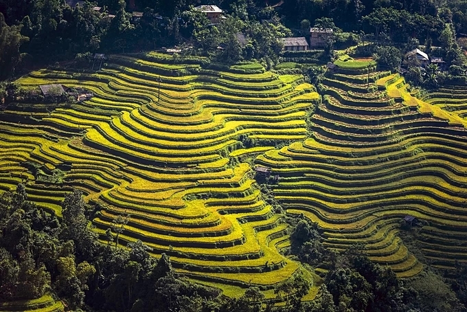 The Hoang Su Phi terraced fields are recognized as a national monument in 2012. The fields cover 11 communes in the northern province of Ha Giang: San Sa Ho, Ho Thau, Nam Ty, Thong Nguyen, Ta Su Choong, Ban Nhung, Po Lo, Thang Tin, Nam Khoa, Ban Luoc, and Ban Phung. The last two mentioned are the communes where the terrace has the biggest height in Vietnam.The fields here are estimated to be around 300 years old; created by the hands of non-stop working, creative people of La Chi, Dao and Nung ethnic groups.
