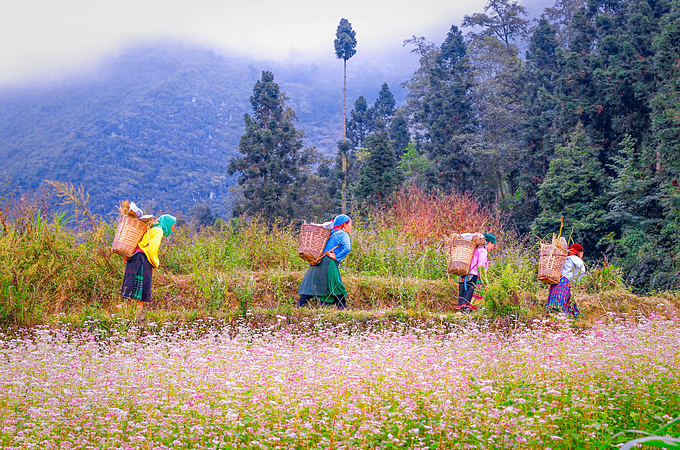HMong women in Pho La Commune, Ha Giang Province walk home. Photo by VnExpress/Tung Duong.