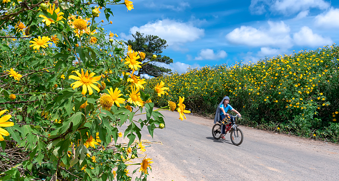 A boy rides through a road dyed with yellow wild flowers. Photo by Minh Phong.
