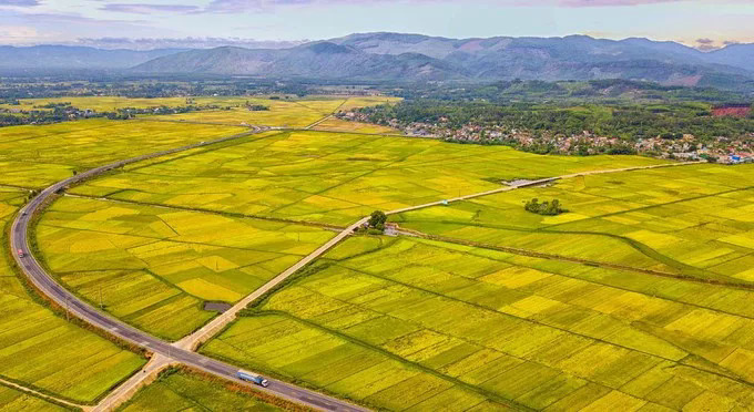 Vast golden rice field in Duc Phong Commune, Mo Duc District in the summer-autumn harvest season. Mo Duc, with an area of 10,000 hectares of rice fields, is known as a largest agricultural district of Quang Ngai Province, .
