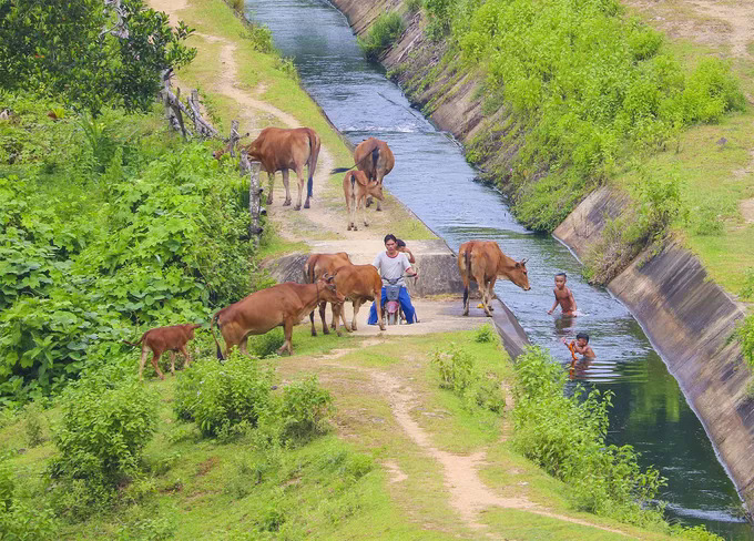 Photos highlight the unqiue countryside charm of Quang Ngai - 6