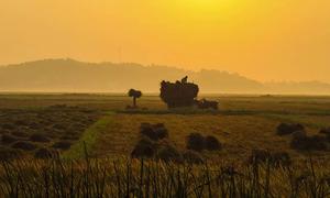 Quang Ngai's idyllic charm in harvest season