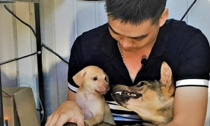 Young man dedicates all his time to abandoned dogs
