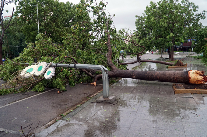 A tree and an electric pole got fell in Quy Nhon City, Binh Dinh Province, October 31, 2019. Photo by VnExpress/Huu Khoa.