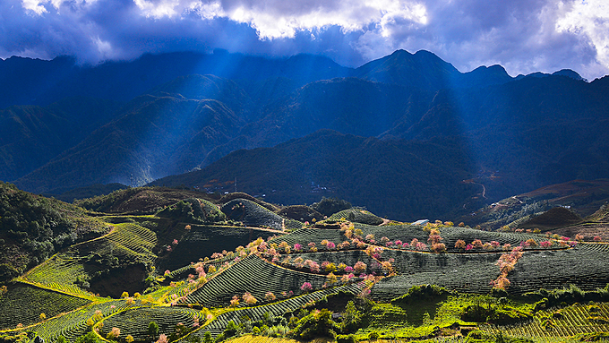 Along the mountain pass, motorbike trekkers can view the incredibly beautiful scenery of cherry trees.