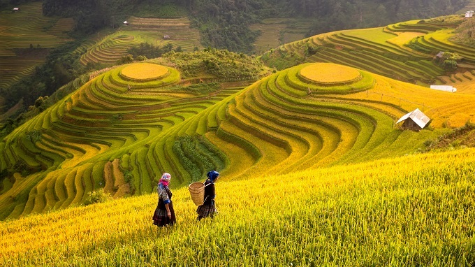 Walking amidst the terraced rice fields in the company of the ethnic minority people who actually live there and farm the land.