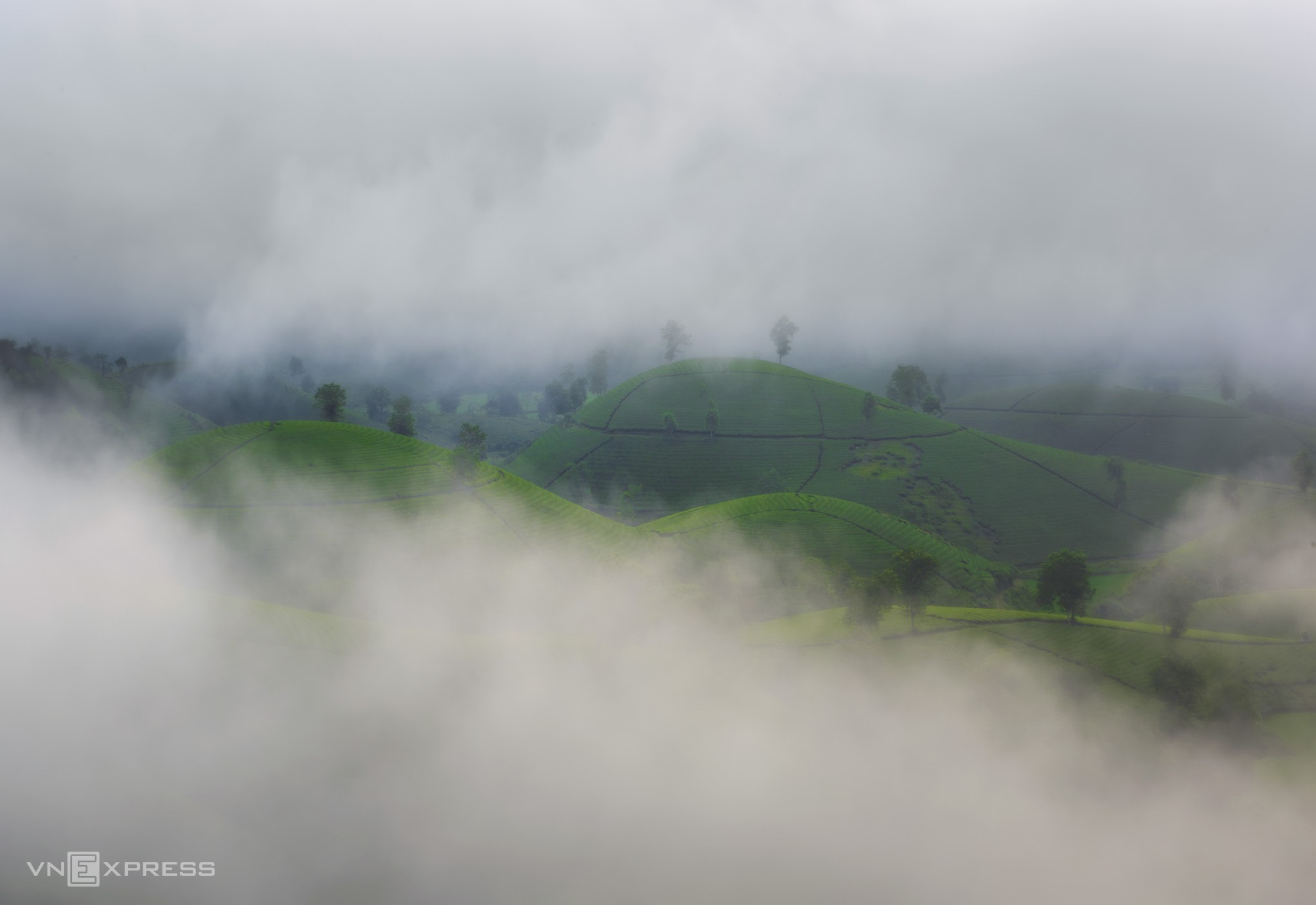 Long Coc tea hills turn lovelier as season change brings mist