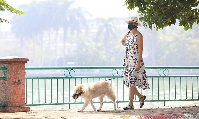A foreigner wears a mask as she walks her dog along the West Lake in Tay Ho District, Hanoi, in the morning of September 30, 2019. Photo by VnExpress/Ngoc Thanh.