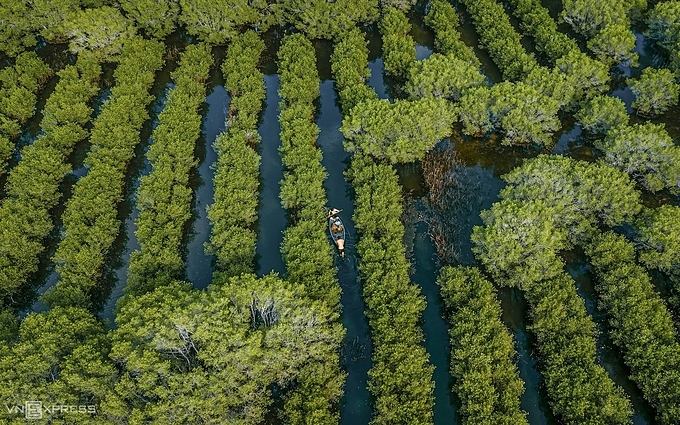 Besides the white patches of deciduous spondias pinnata trees are the green carpet of young trees which are sprouting.The mangrove forest recently is a photographer's dreamy destination due to its pristine beauty especially during the fallen leaves season.