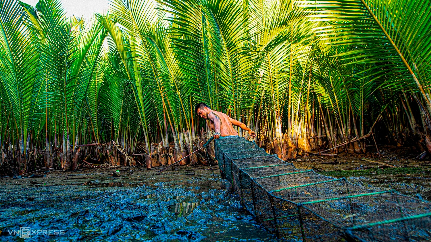 Once wartime shelter, Quang Ngai's nipa palm forest turns tourist attraction
