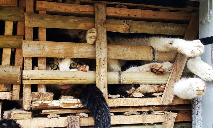 Paws for thought: cat meat still top of the menu